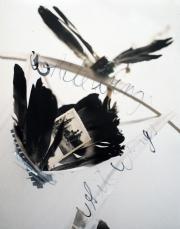 13_white-wings